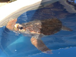sea turtle vacations in bahia